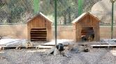 Gaziantep'e Sokak Hayvanları için Rehabilitasyon Merkezi