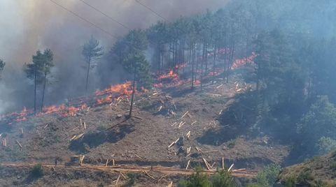 Yanan Ormanların Başka Amaçla Kullanılmasına Müsaade Edilmeyecek