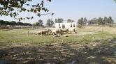 Rehabilitasyon Merkezi Olacaktı, Koyunlar Otluyor