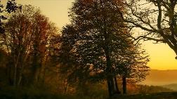 Orman Sayılmayan Yerlerdeki Ağaçlardan Faydalanmak Kolaylaştırıldı