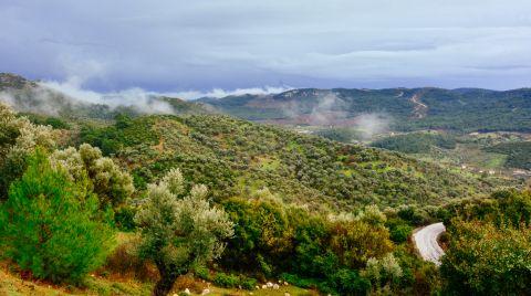 Köylüler Asırlık Zeytin Ağaçlarını Korumak için Dava Açtı