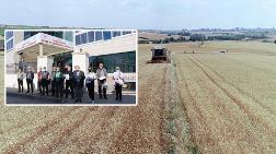 Edirne'nin Tarım Arazileri Tehlikede