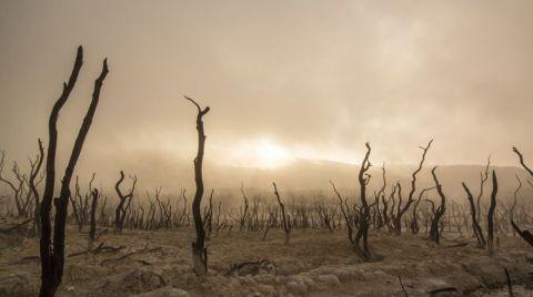 Karbondioksit Salımı Altıncı Kitlesel Yok Oluşa Yol Açabilir