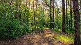 Antalya'da Sokağa Çıkma Yasağında Ağaçları Kestiler