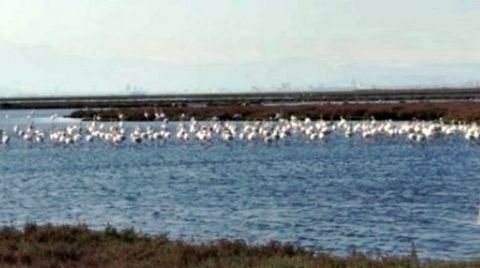 Kuş Cennetinde Jeotermal Tehlikesi