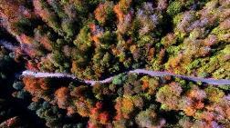 Hatay'da Kurulacak 'Turizm Ormanı' için Hedef: 100 Bin Ağaç