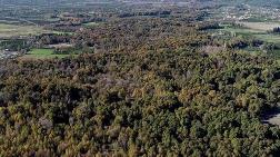 Milli Parklar Ağaç Kesimine Açıldı
