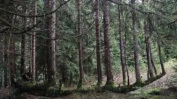 Halk Madene Karşı Ağaçlarını Koruyacak