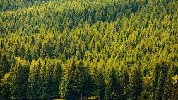 Ormanlar Rant için Feda Ediliyor
