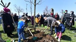 Üsküdar'da Gece Kesilen Ağaçların Yerine Yenileri Dikildi