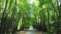 Para Bitti, Doğa Talana Açılıyor