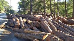 Kentsel Dönüşüm - Ormanlar Kamu Yararı Adı Altında Özel Teşebbüse Açılıyor