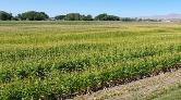 15 Hatay Büyüklüğünde Tarım Alanı Kaybedildi