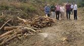 Mersin'de 'Gençleştirme' Adı Altında Ağaç Kesimi Yapılıyor