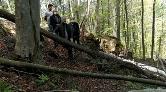 Ordu'da Yüzlerce Ağaç Kesildi