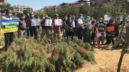 Ağaç Kesimine Karşı İmza Kampanyası