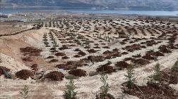 Türkiye'de Çölleşme ve Kuraklıkla Mücadele Çalışmaları Sürüyor