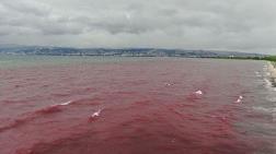 Körfezi Kırmızıya Boyayan Firma Mühürlendi