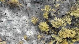 Yangın, Çölleşme ve Kuraklık Her Yıl 15 Trilyon Dolar Zarar Veriyor