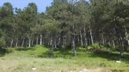 Ormanlık Alana Bazalt Ocağı Ruhsatı