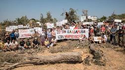 Seferihisar'da JES Şirketi Zeytin Ağaçlarını Kesiyor