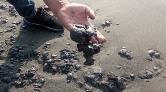 Samandağ'da Sahile Petrol Atığı Vurdu