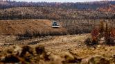 Antalya'da Yanan Ormanlar 100 Milyon Fidanla Yeşerecek