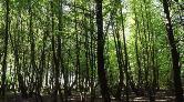 Muğla'da Orman Kalmayacak