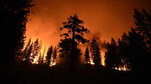 ABD'deki Yangınlar En Büyük Ağaçları Tehdit Ediyor