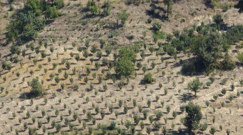 Adana'da Yanan Ormanlık Alan Yeşerdi