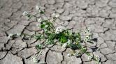İklim Değişikliğiyle Mücadelede Yol Haritası 'İklim Şurası'yla Oluşturulacak