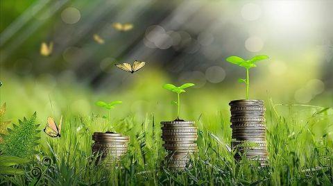 Yeşil Dönüşüm Projesi Olan Gençlere Hibe Desteği Verilecek
